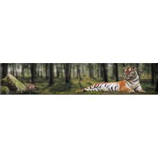 Кухонный фартук Животные №5 Тигр