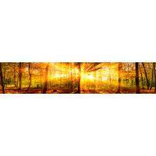 Кухонный фартук Просторы №49 Утренний лес